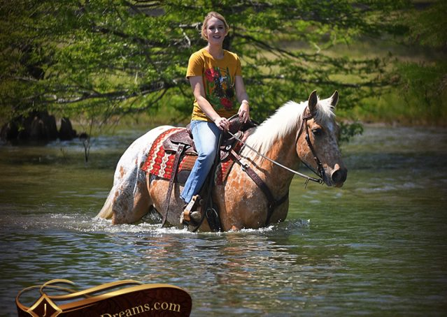 032-Regis-Palomino-Appaloosa-Gelding-For-Sale