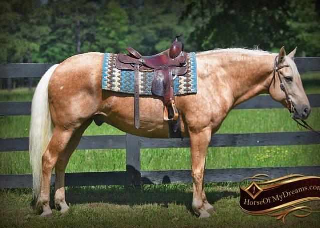 001-Big-Vegas-Palomino-Quarter-Horse-Gelding-For-Sale