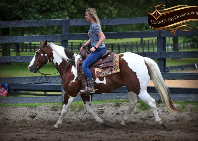 002-Bee-APHA-Tobiano-Roping-Gelding-For-Sale