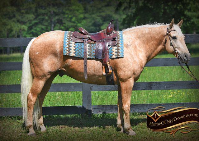 002-Big-Vegas-Palomino-Quarter-Horse-Gelding-For-Sale