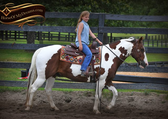 003-Bee-APHA-Tobiano-Roping-Gelding-For-Sale