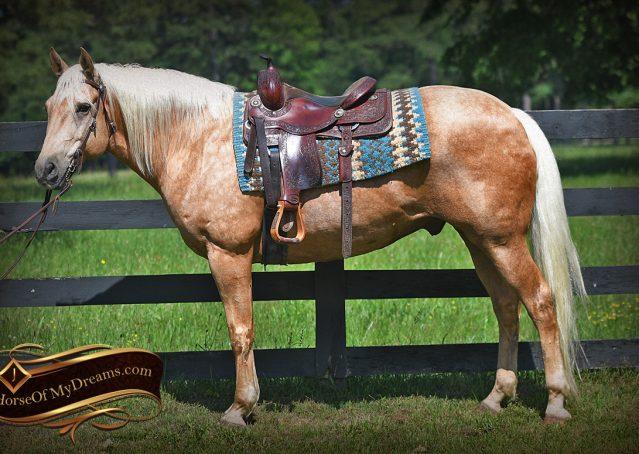 003-Big-Vegas-Palomino-Quarter-Horse-Gelding-For-Sale