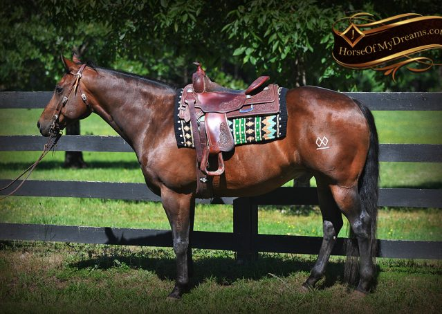 003-Sheldon-Bay-AQHA-Gorgeous-Ranch-Gelding-For-Sale