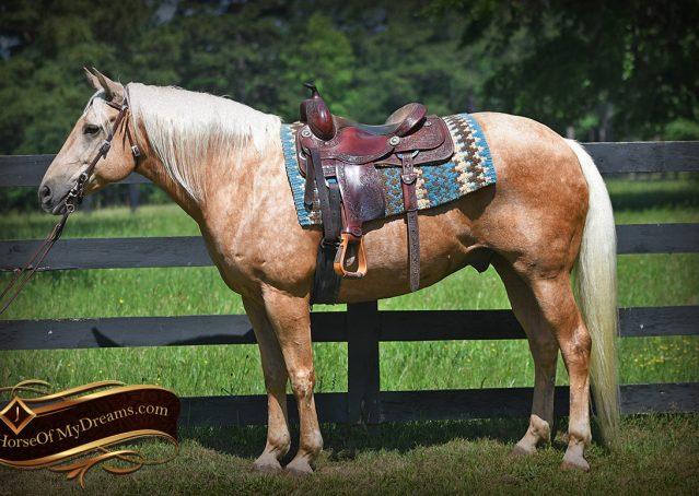 005-Big-Vegas-Palomino-Quarter-Horse-Gelding-For-Sale