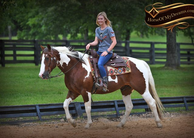 006-Bee-APHA-Tobiano-Roping-Gelding-For-Sale