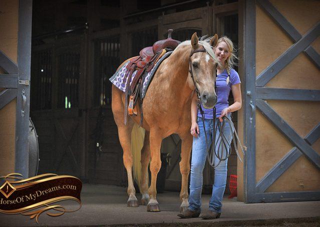 006-Big-Vegas-Palomino-Quarter-Horse-Gelding-For-Sale