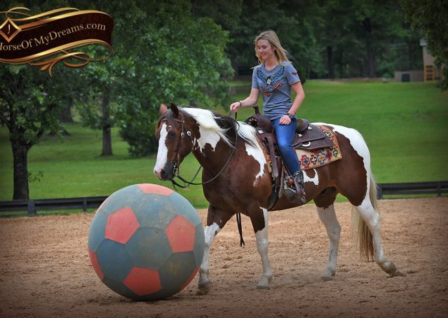 007-Bee-APHA-Tobiano-Roping-Gelding-For-Sale