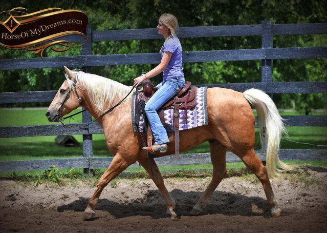 007-Big-Vegas-Palomino-Quarter-Horse-Gelding-For-Sale