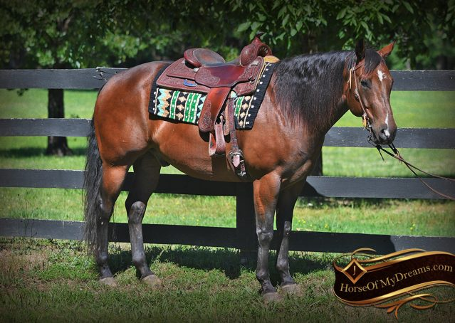 007-Sheldon-Bay-AQHA-Gorgeous-Ranch-Gelding-For-Sale