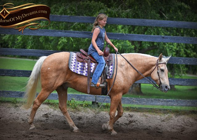 008-Big-Vegas-Palomino-Quarter-Horse-Gelding-For-Sale
