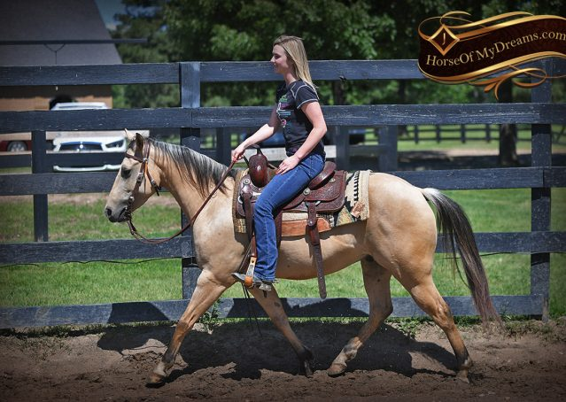 008-Prince-AQHA-Buttermilk-Buckskin-Quarter-Horse-Gelding-For-Sale