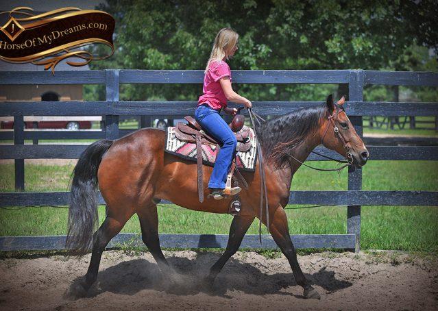 008-Sheldon-Bay-AQHA-Gelding-horse-For-Sale