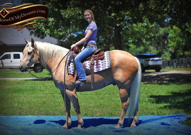 009-Big-Vegas-Palomino-Quarter-Horse-Gelding-For-Sale