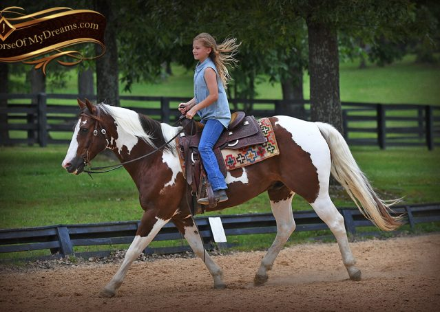 010-Bee-APHA-Tobiano-Roping-Gelding-For-Sale