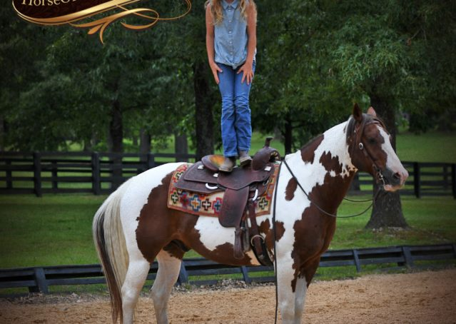 011-Bee-APHA-Tobiano-Roping-Gelding-For-Sale