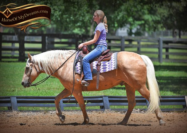 011-Big-Vegas-Palomino-Quarter-Horse-Gelding-For-Sale