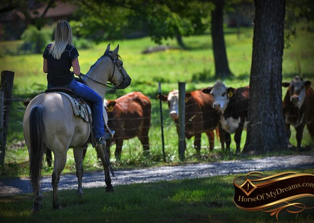 011-Prince-AQHA-Buttermilk-Buckskin-Quarter-Horse-Gelding-For-Sale