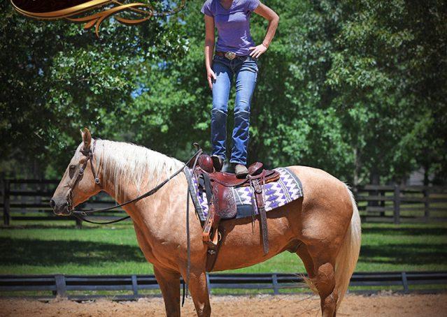 012-Big-Vegas-Palomino-Quarter-Horse-Gelding-For-Sale