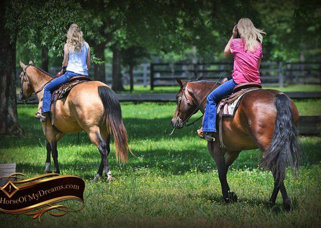 012-Sheldon-Bay-AQHA-Gelding-horse-For-Sale