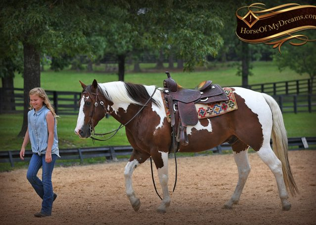 013-Bee-APHA-Tobiano-Roping-Gelding-For-Sale