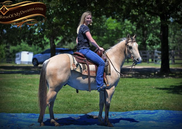 013-Prince-AQHA-Buttermilk-Buckskin-Quarter-Horse-Gelding-For-Sale