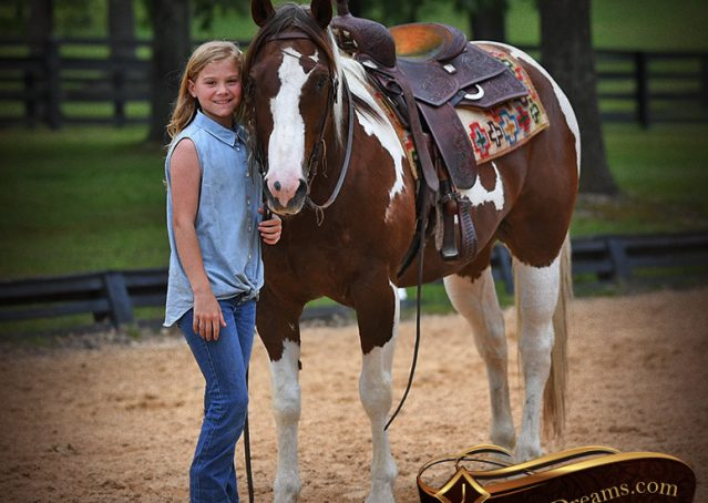 014-Bee-APHA-Tobiano-Roping-Gelding-For-Sale