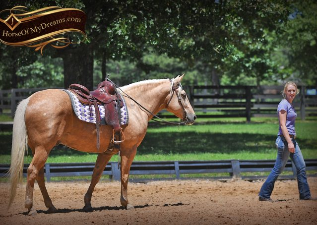 014-Big-Vegas-Palomino-Quarter-Horse-Gelding-For-Sale