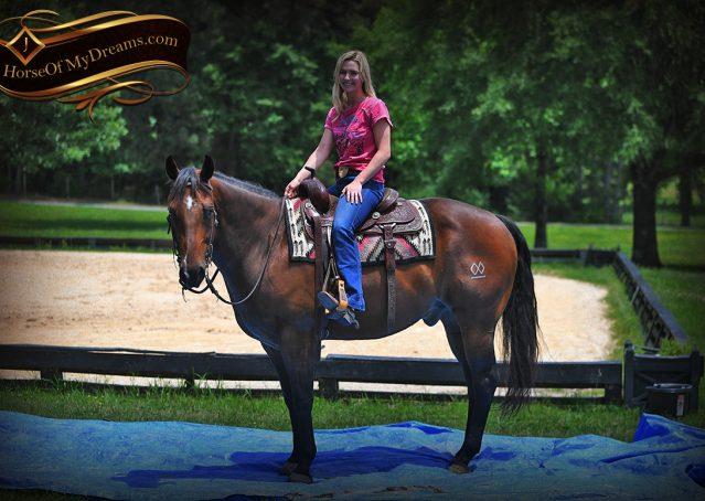 014-Sheldon-Bay-AQHA-Gelding-horse-For-Sale