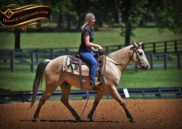 015-Prince-AQHA-Buttermilk-Buckskin-Quarter-Horse-Gelding-For-Sale