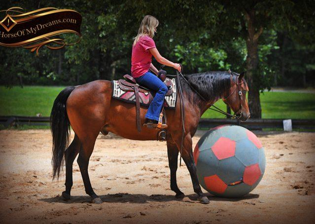 016-Sheldon-Bay-AQHA-Gelding-horse-For-Sale