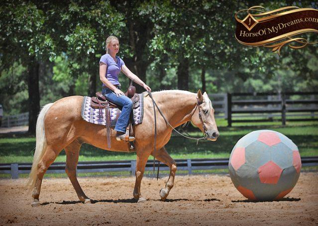 017-Big-Vegas-Palomino-Quarter-Horse-Gelding-For-Sale