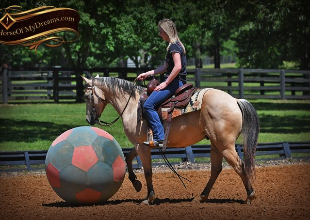 017-Prince-AQHA-Buttermilk-Buckskin-Quarter-Horse-Gelding-For-Sale