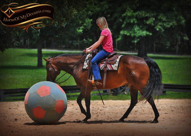 017-Sheldon-Bay-AQHA-Gelding-horse-For-Sale
