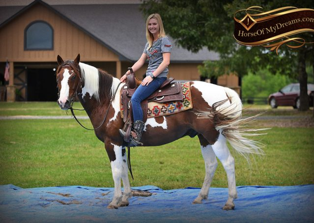 019-Bee-APHA-Tobiano-Roping-Gelding-For-Sale