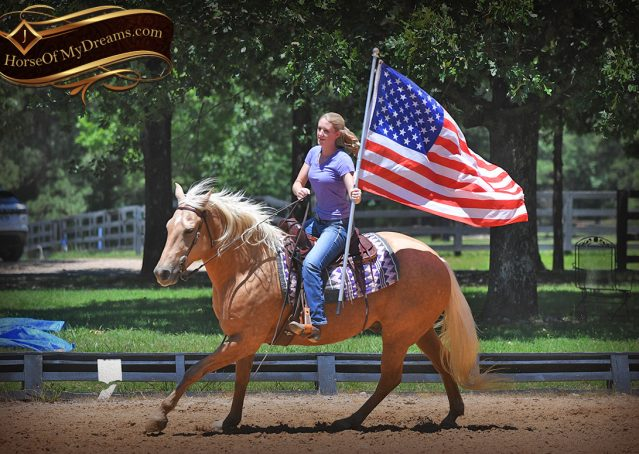 019-Big-Vegas-Palomino-Quarter-Horse-Gelding-For-Sale