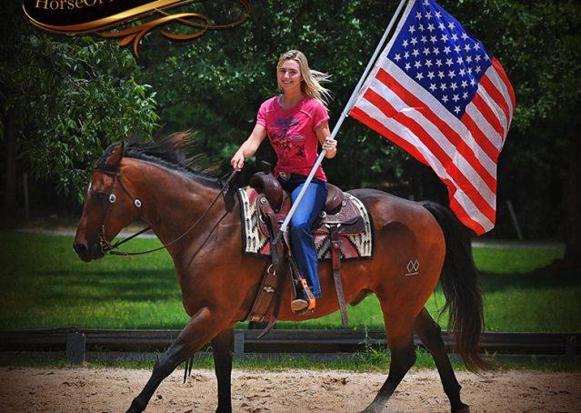 019-Sheldon-Bay-AQHA-Gelding-horse-For-Sale