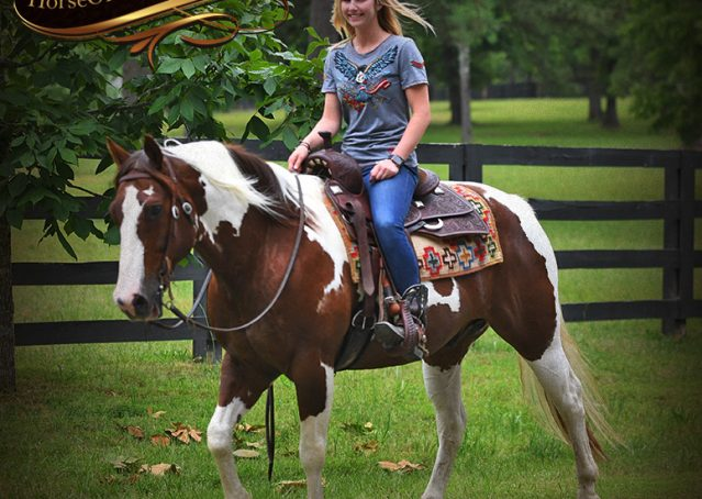 022-Bee-APHA-Tobiano-Roping-Gelding-For-Sale