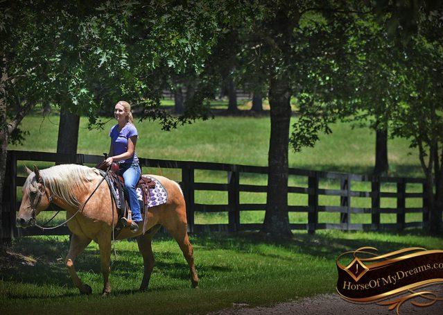 023-Big-Vegas-Palomino-Quarter-Horse-Gelding-For-Sale