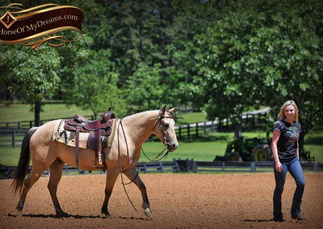 023-Prince-AQHA-Buttermilk-Buckskin-Quarter-Horse-Gelding-For-Sale
