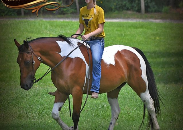 024-Jessie-Bay-Tobiano-Paint-For-Sale