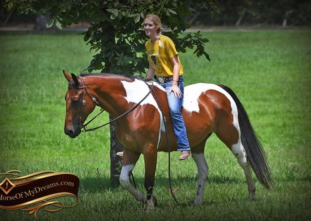025-Jessie-Bay-Tobiano-Paint-For-Sale