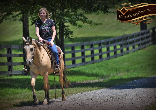 026-Prince-AQHA-Buttermilk-Buckskin-Quarter-Horse-Gelding-For-Sale