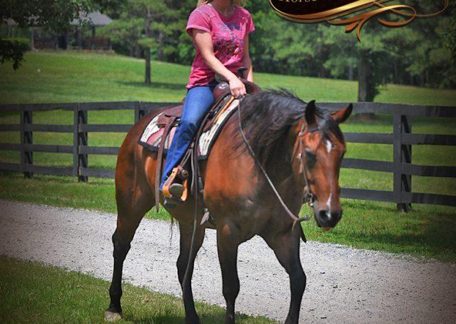 026-Sheldon-Bay-AQHA-Gelding-horse-For-Sale