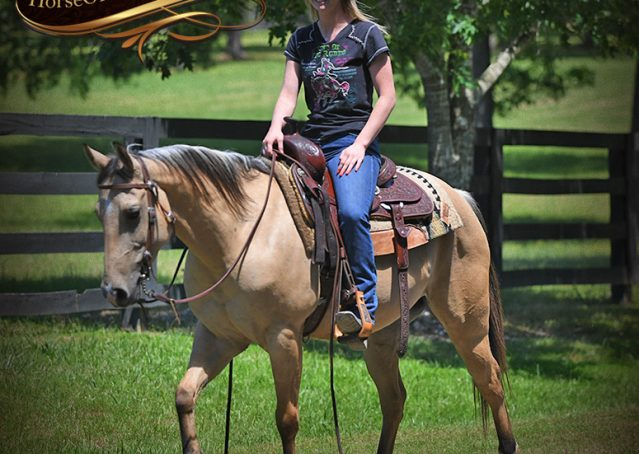027-Prince-AQHA-Buttermilk-Buckskin-Quarter-Horse-Gelding-For-Sale