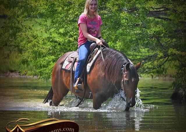 027-Sheldon-Bay-AQHA-Gelding-horse-For-Sale