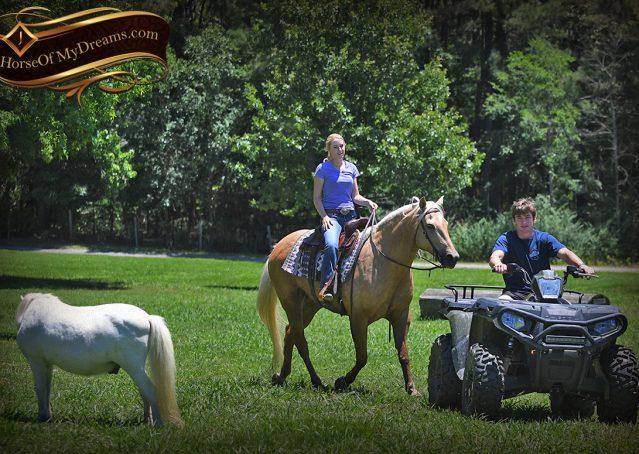 028-Big-Vegas-Palomino-Quarter-Horse-Gelding-For-Sale