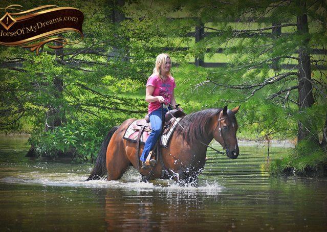 028-Sheldon-Bay-AQHA-Gelding-horse-For-Sale