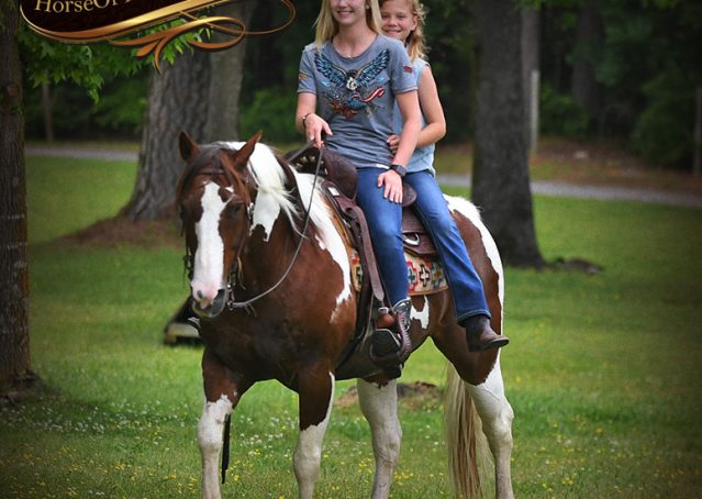 029-Bee-APHA-Tobiano-Roping-Gelding-For-Sale
