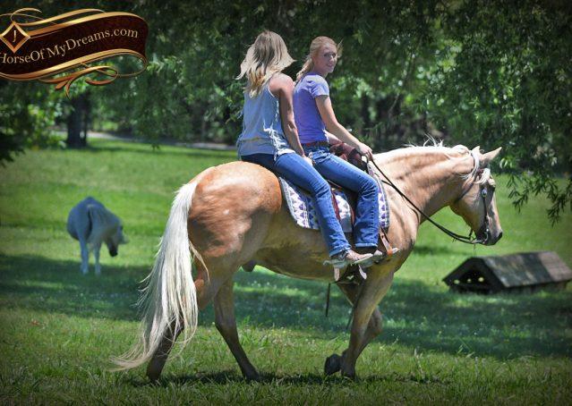 029-Big-Vegas-Palomino-Quarter-Horse-Gelding-For-Sale