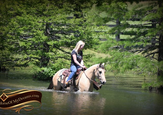 029-Prince-AQHA-Buttermilk-Buckskin-Quarter-Horse-Gelding-For-Sale